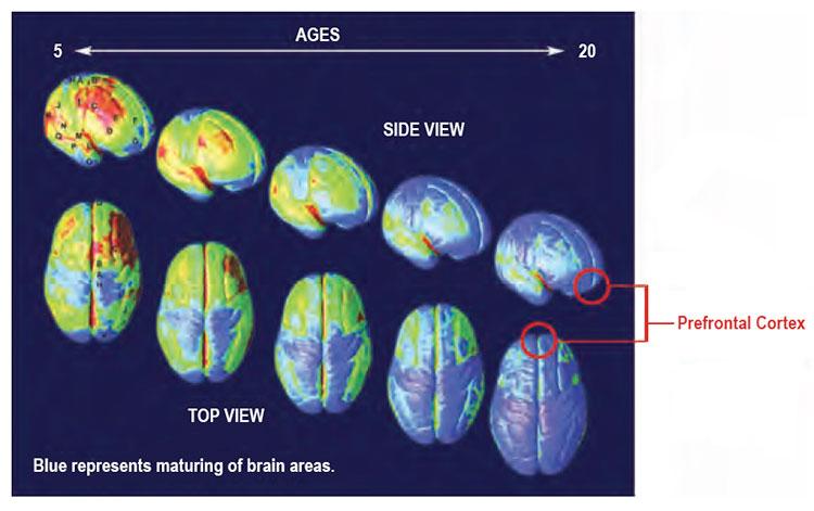 braindevelopment3